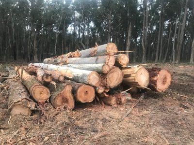 tree clearing Wheatsheaf